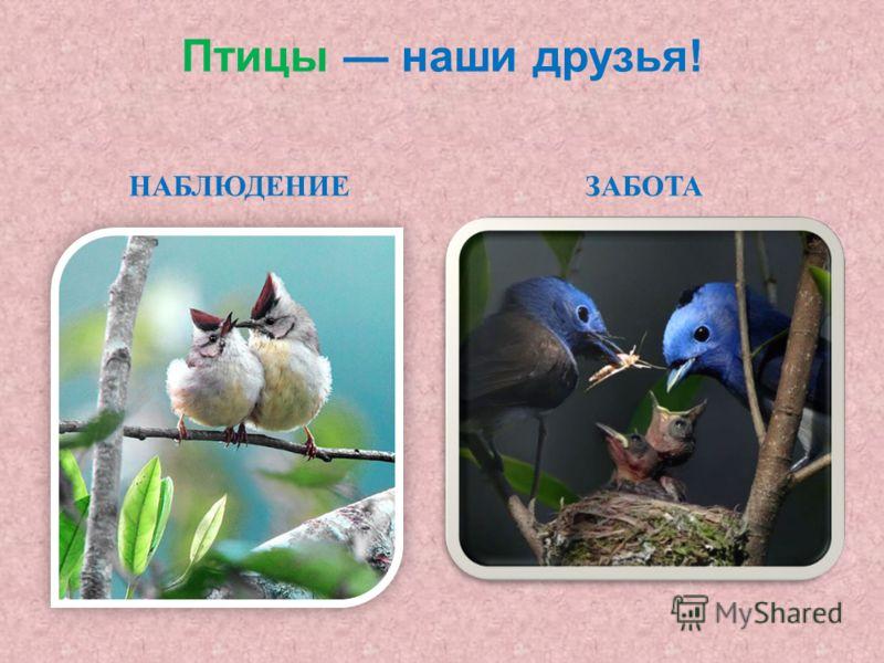 Птицы наши друзья ! НАБЛЮДЕНИЕЗАБОТА