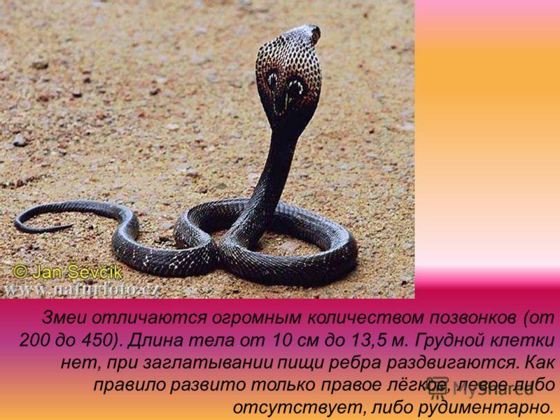 Змеи отличаются огромным количеством позвонков (от 200 до 450). Длина тела от 10 см до 13,5 м. Грудной клетки нет, при заглатывании пищи ребра раздвигаются. Как правило развито только правое лёгкое, левое либо отсутствует, либо рудиментарно.