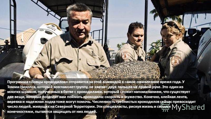 Программа «Ловцы крокодилов» отправится за этой командой в самое оживленное время года. У Томми Николса, который возглавляет группу, не хватает двух пальцев на правой руке. Это один из многих шрамов, полученных в битве с крокодилами, который служит н