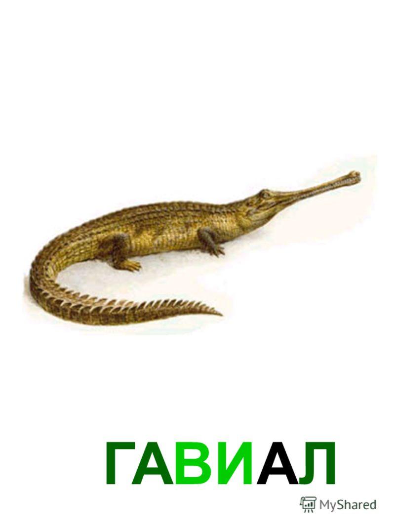 ГАВИАЛ