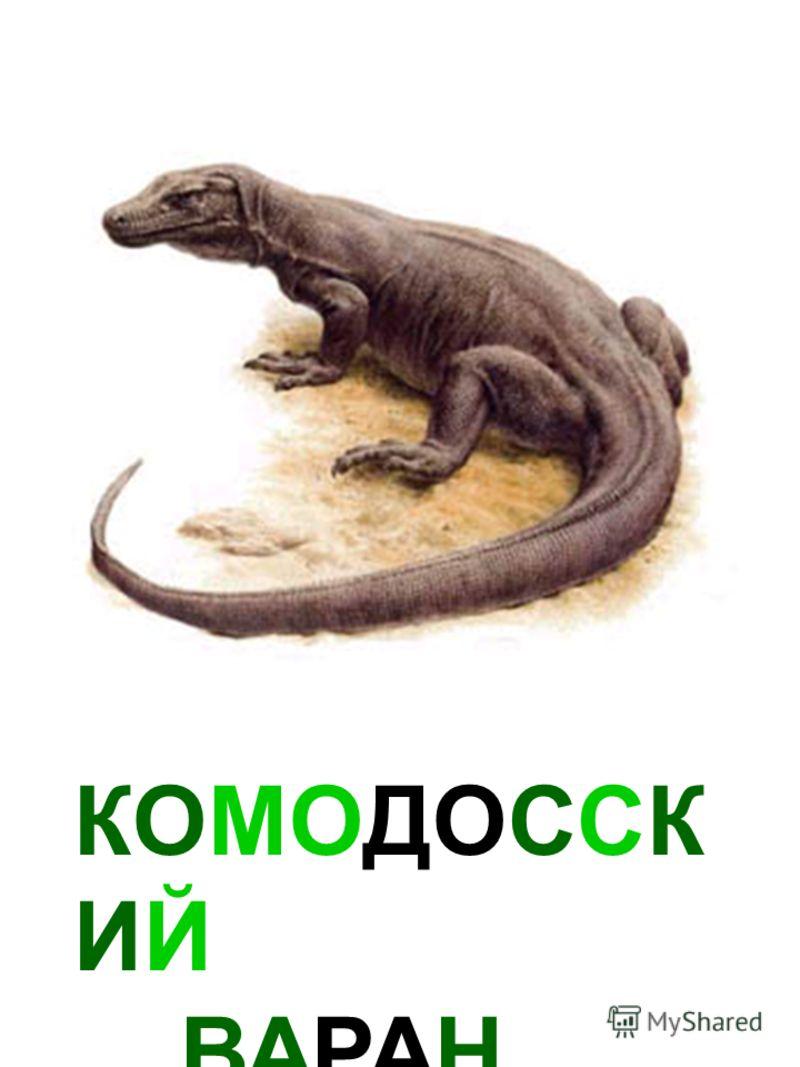 КОМОДОССК ИЙ ВАРАН