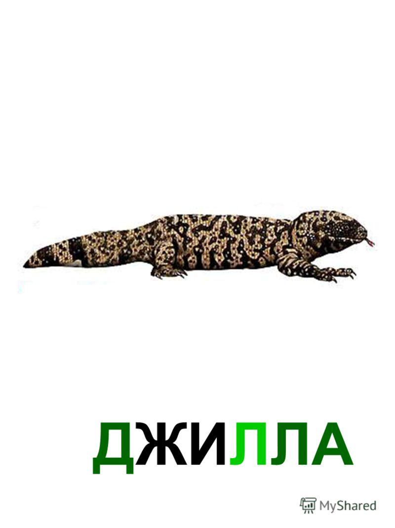 ДЖИЛЛА