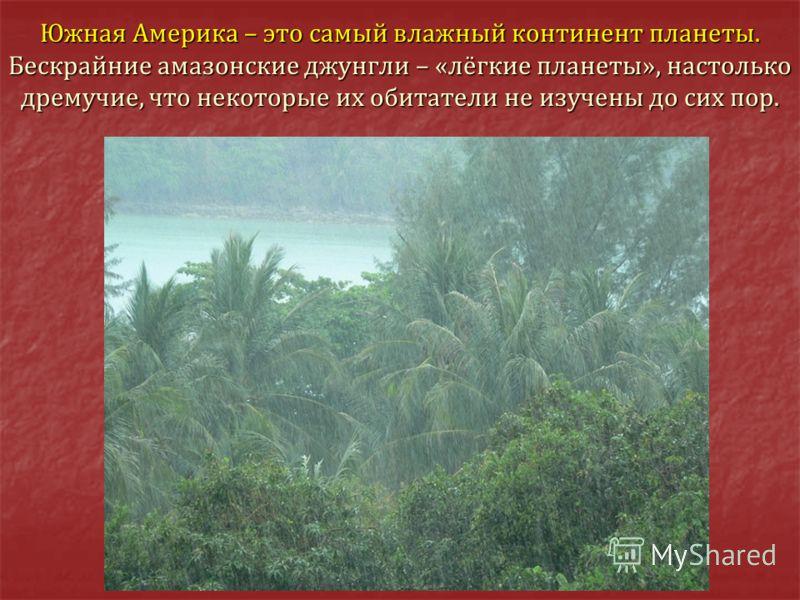 Южная Америка – это самый влажный континент планеты. Бескрайние амазонские джунгли – «лёгкие планеты», настолько дремучие, что некоторые их обитатели не изучены до сих пор.