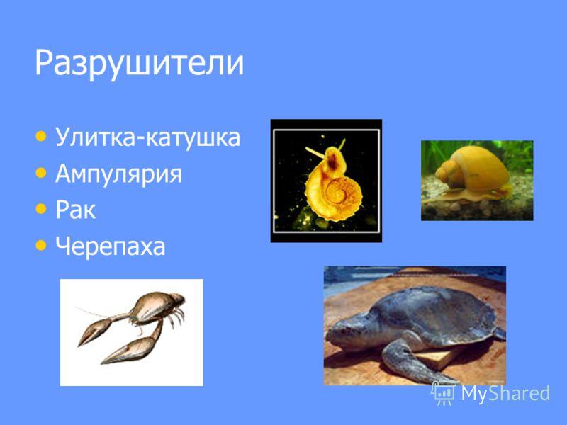 Разрушители Улитка-катушка Ампулярия Рак Черепаха