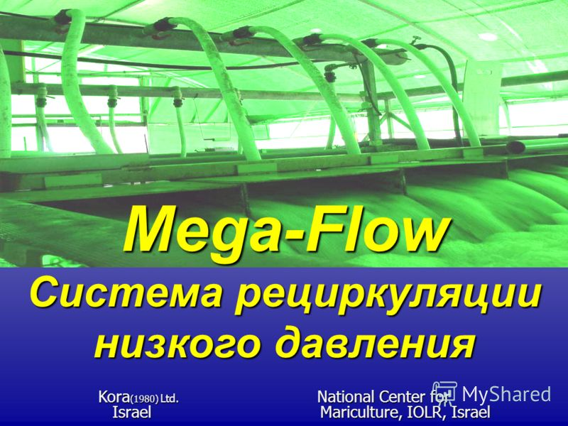 Mega-Flow Система рециркуляции низкого давления Kora (1980) Ltd. National Center for Kora (1980) Ltd. National Center for Israel Mariculture, IOLR, Israel Israel Mariculture, IOLR, Israel