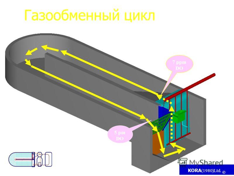KORA (1980)Ltd. © 5 pm DO 7 ppm DO Газообменный цикл DO - Dissolve oxygen (растворенный кислород )