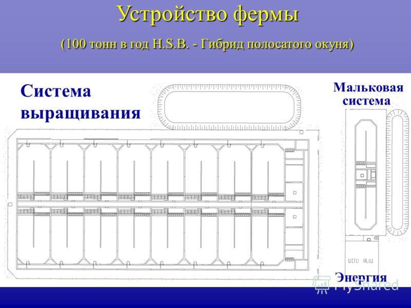 Устройство фермы (100 тонн в год H.S.B. - Гибрид полосатого окуня) Система выращивания Мальковая система Энергия