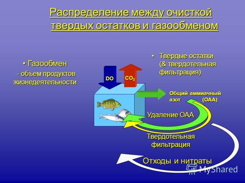 Твердые остатки (& твердотельная фильтрация)Твердые остатки (& твердотельная фильтрация) Отходы и нитраты Газообмен Газообмен - объем продуктов жизнедеятельности - объем продуктов жизнедеятельности DO Общий аммиачный азот (ОАА) Удаление ОАА Распредел