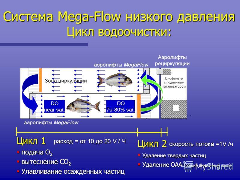 9 Система Mega-Flow низкого давления Цикл водоочистки: Аэролифты рециркуляции аэролифты MegaFlow Зона циркуляции DO near sat. DO 70-80% sat. Биофильтр с подвижным катализатором расход = от 10 до 20 V / Ч Цикл 1 подача O 2 подача O 2 вытеснение CO 2 в