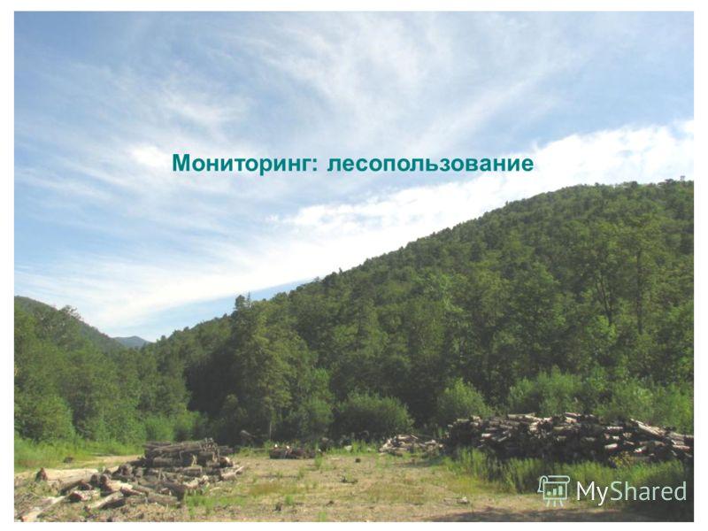 Мониторинг: лесопользование