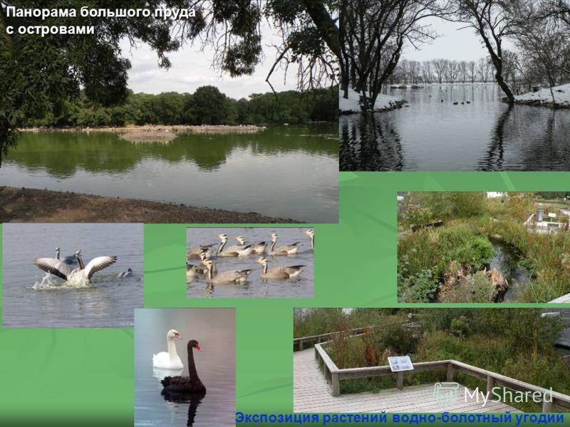 Панорама большого пруда с островами Экспозиция растений водно-болотный угодий