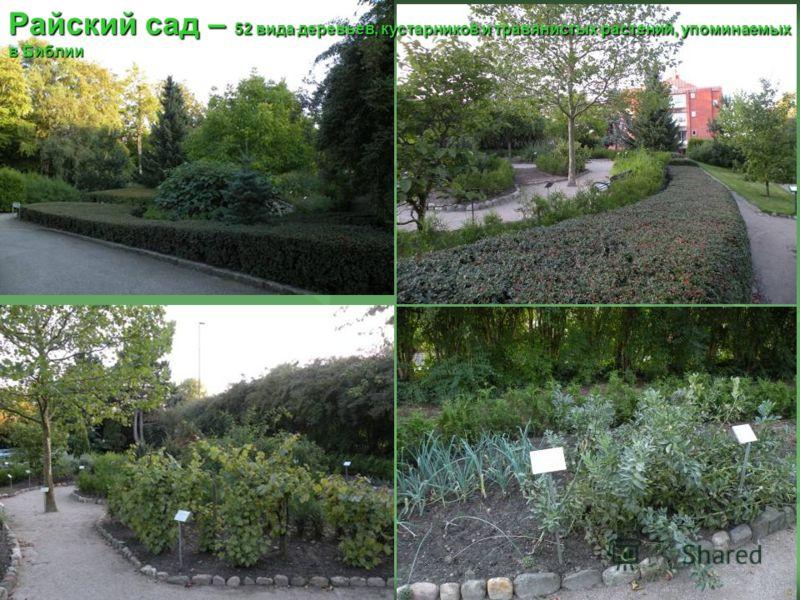 Райский сад – 52 вида деревьев, кустарников и травянистых растений, упоминаемых в Библии