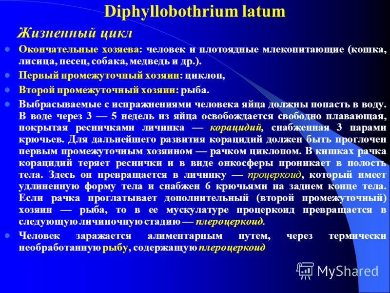 Diphyllobothrium latum Жизненный цикл Окончательные хозяева: человек и плотоядные млекопитающие (кошка, лисица, песец, собака, медведь и др.). Первый промежуточный хозяин: циклоп, Второй промежуточный хозяин: рыба. Выбрасываемые с испражнениями челов