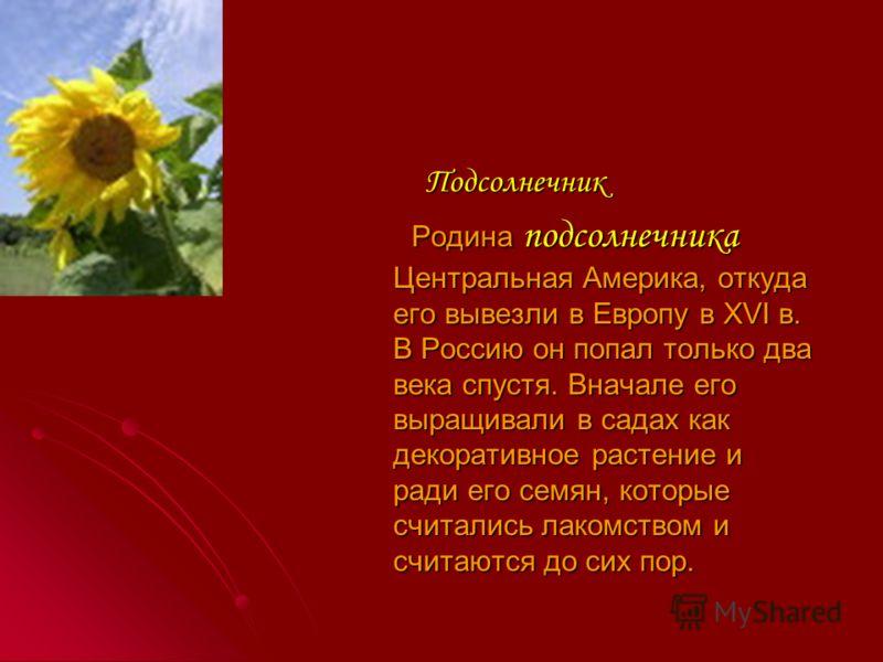 Настурция Ярко-оранжевые настурции называют также капуцинами из-за островерхой формы цветка, напоминающие капюшон монаха - капуцина. На родине в тропической Америке, можно встретить до 80 видов настурций. Ярко-оранжевые настурции называют также капуц