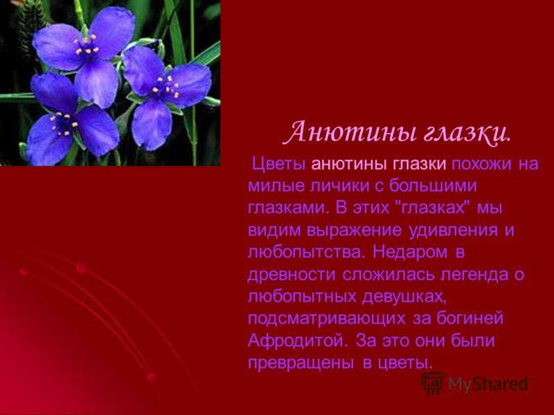 Тюльпан. Тюльпан. Этот цветок когда-то украшал персидские сады. В VII в. его вывезли в Голландию. Этот цветок поразил голландцев своей неожиданной красотой. Его стали разводить для продажи. За лучшие сорта отдавали лошадей, бочки масла и даже ежегодн