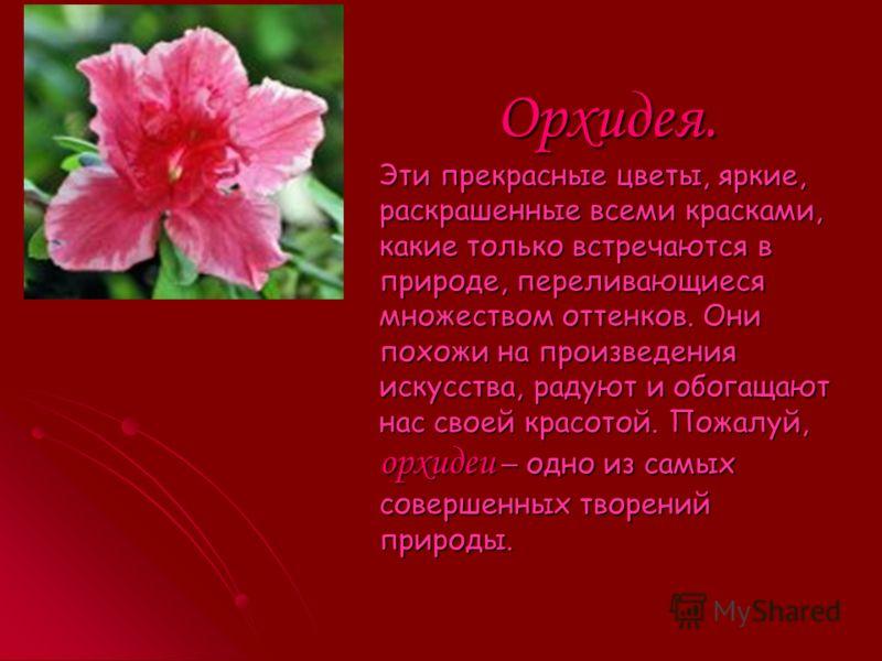 Розы. Розы. У каждого из нас есть самый любимый цветок. Но во все времена, все народы отдавали своё предпочтение розе. Впервые розы начали разводить на восточных берегах Средиземноморья.