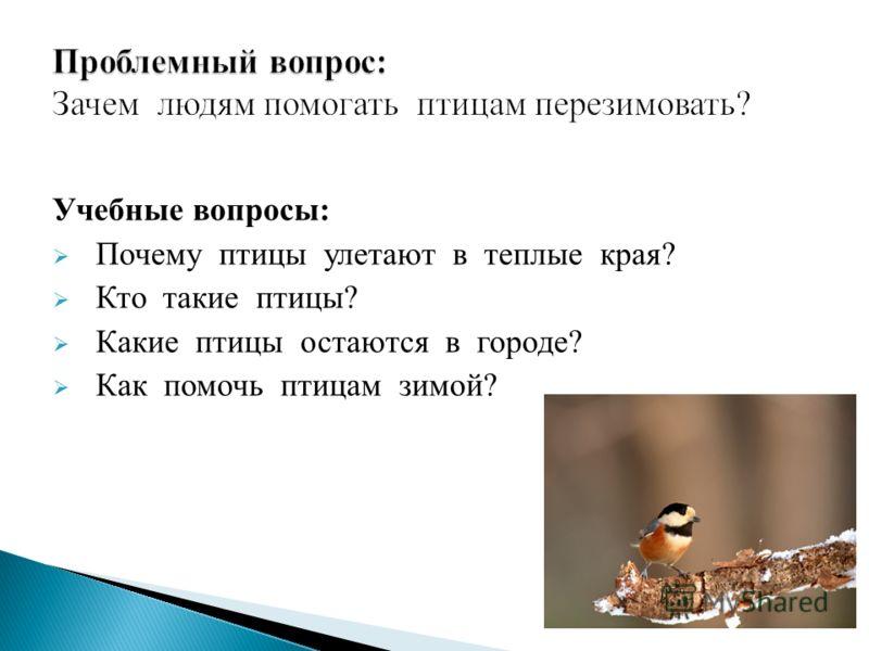 Учебные вопросы: Почему птицы улетают в теплые края? Кто такие птицы? Какие птицы остаются в городе? Как помочь птицам зимой?