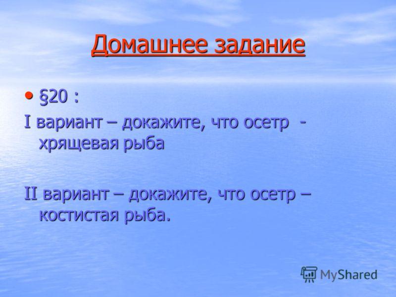 Домашнее задание Домашнее задание §20 : §20 : I вариант – докажите, что осетр - хрящевая рыба II вариант – докажите, что осетр – костистая рыба.