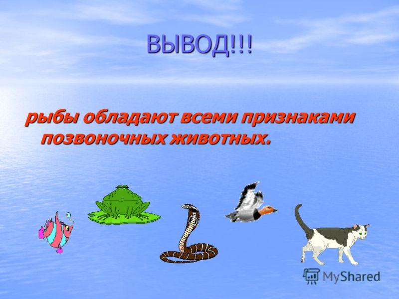 ВЫВОД!!! рыбы обладают всеми признаками позвоночных животных.