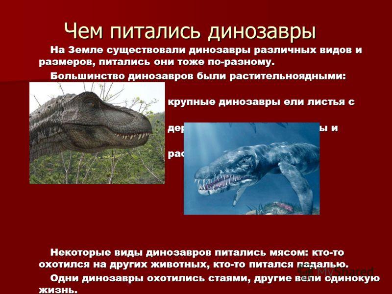 Чем питались динозавры На Земле существовали динозавры различных видов и размеров, питались они тоже по-разному. На Земле существовали динозавры различных видов и размеров, питались они тоже по-разному. Большинство динозавров были растительноядными: