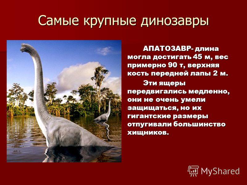 Самые крупные динозавры АПАТОЗАВР- длина могла достигать 45 м, вес примерно 90 т, верхняя кость передней лапы 2 м. АПАТОЗАВР- длина могла достигать 45 м, вес примерно 90 т, верхняя кость передней лапы 2 м. Эти ящеры передвигались медленно, они не оче