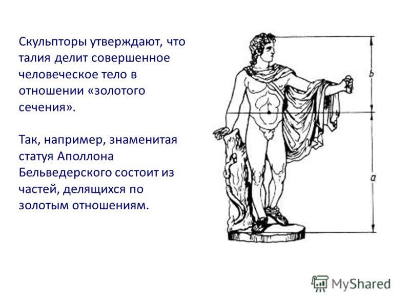 Скульпторы утверждают, что талия делит совершенное человеческое тело в отношении «золотого сечения». Так, например, знаменитая статуя Аполлона Бельведерского состоит из частей, делящихся по золотым отношениям.