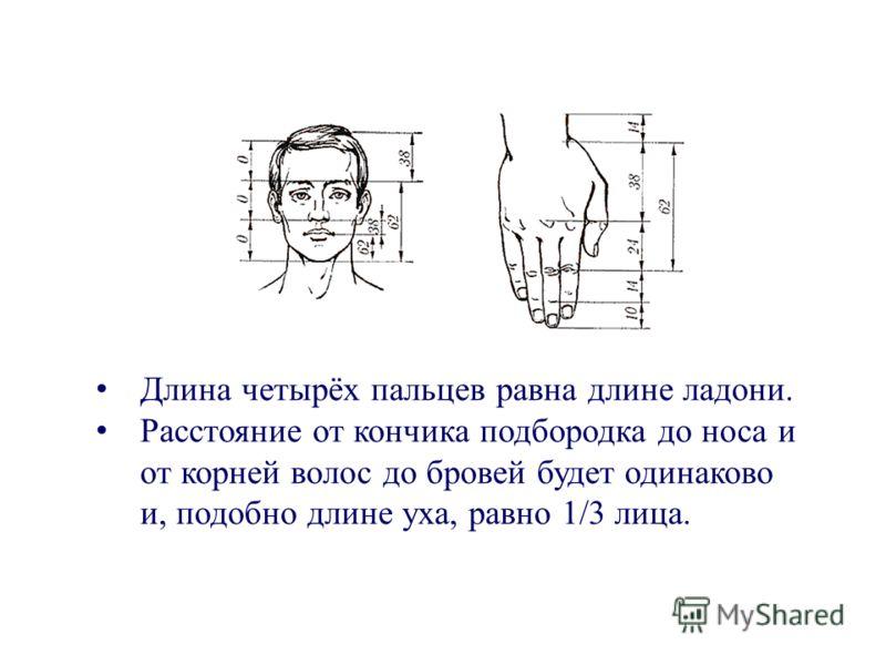 Длина четырёх пальцев равна длине ладони. Расстояние от кончика подбородка до носа и от корней волос до бровей будет одинаково и, подобно длине уха, равно 1/3 лица.