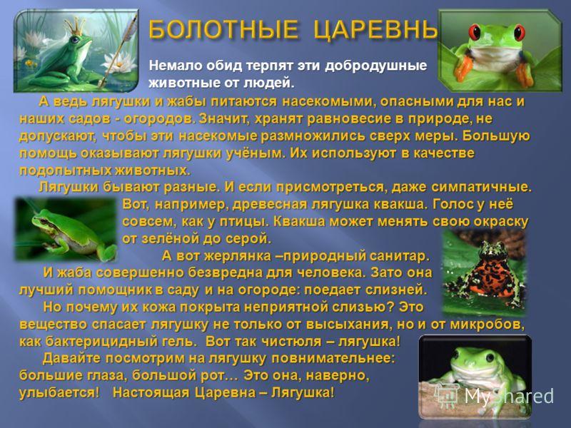 Немало обид терпят эти добродушные животные от людей. А ведь лягушки и жабы питаются насекомыми, опасными для нас и наших садов - огородов. Значит, хранят равновесие в природе, не допускают, чтобы эти насекомые размножились сверх меры. Большую помощь