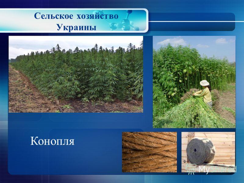 Сельское хозяйство Украины Лён