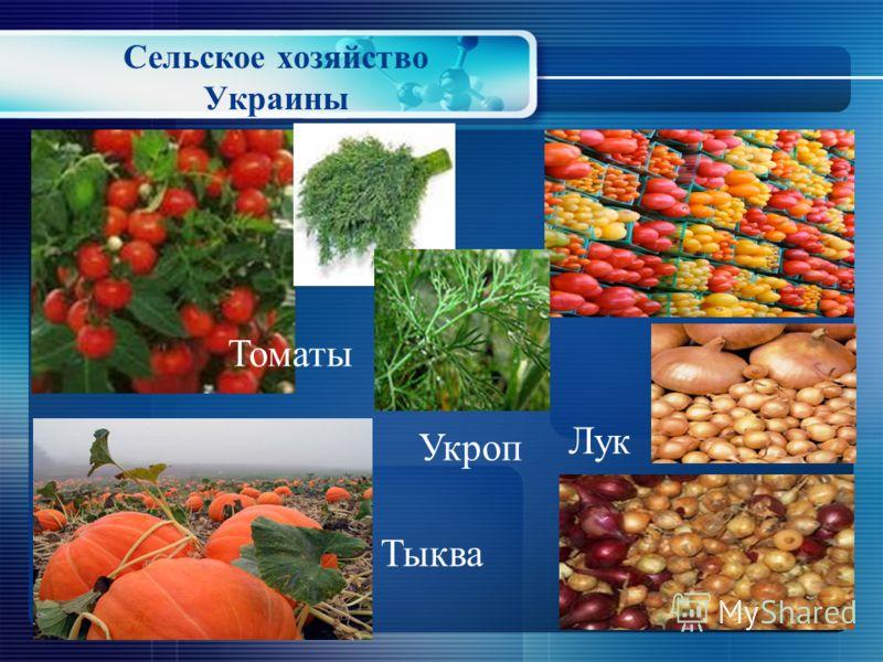 Сельское хозяйство Украины Перец Морковь Огурeц