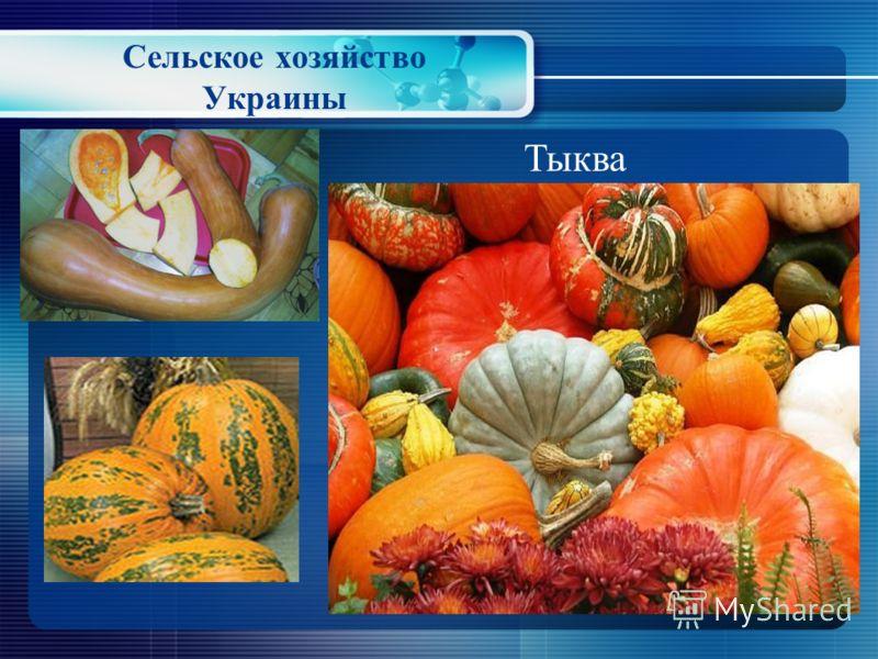 Сельское хозяйство Украины Арбуз