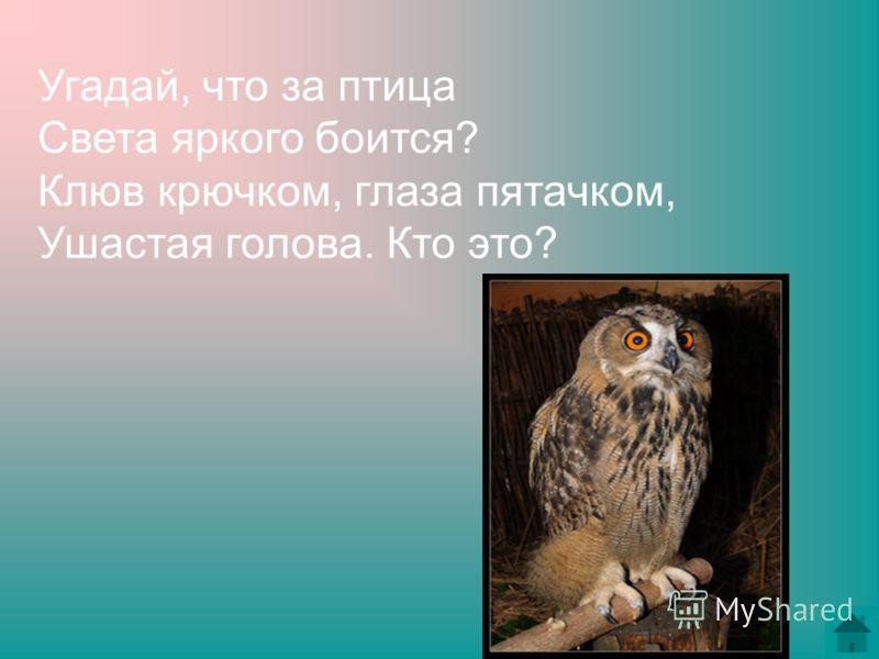Угадай, что за птица Света яркого боится? Клюв крючком, глаза пятачком, Ушастая голова. Кто это?