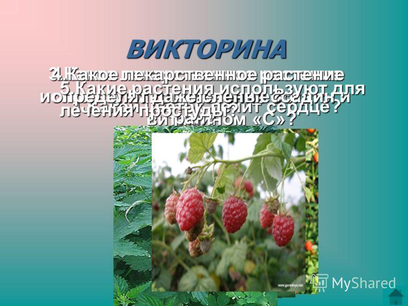 ВИКТОРИНА 1.Какой цветок лечит сердце? 2.Какое растение богато витамином «С»? 3.Какое лекарственное растение используют для лечения ссадин и ран? 4.Какое лекарственное растение определят даже слепые? 5.Какие растения используют для лечения простуды?