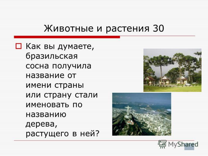 Животные и растения 30 Как вы думаете, бразильская сосна получила название от имени страны или страну стали именовать по названию дерева, растущего в ней?