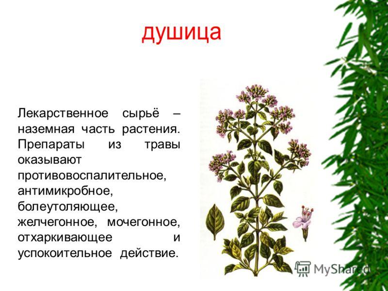 Лекарственные травы и растения конечно