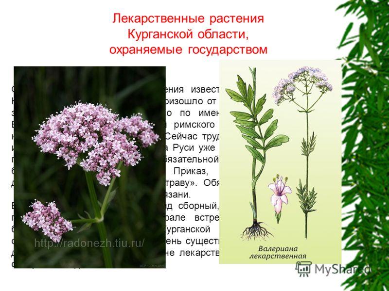 Лекарственные растения Курганской области, охраняемые государством О целительных свойствах растения известно людям очень давно. Научное название, возможно, произошло от слова «вале-ре» быть здоровым. А может быть, дано по имени римского императора Ва