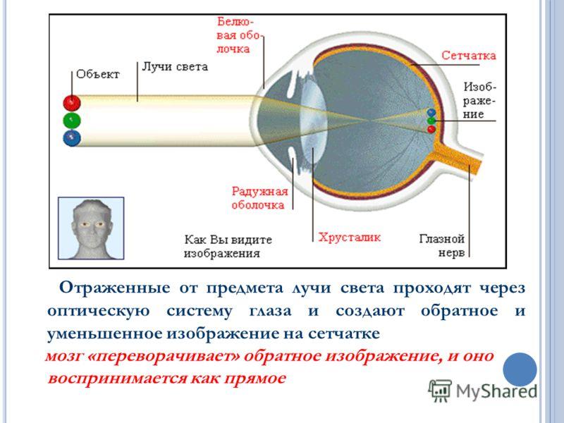 М ЕХАНИЗМ РАБОТЫ ОПТИЧЕСКОЙ СИСТЕМЫ ГЛАЗА. Отраженные от предмета лучи света проходят через оптическую систему глаза и создают обратное и уменьшенное изображение на сетчатке мозг «переворачивает» обратное изображение, и оно воспринимается как прямое