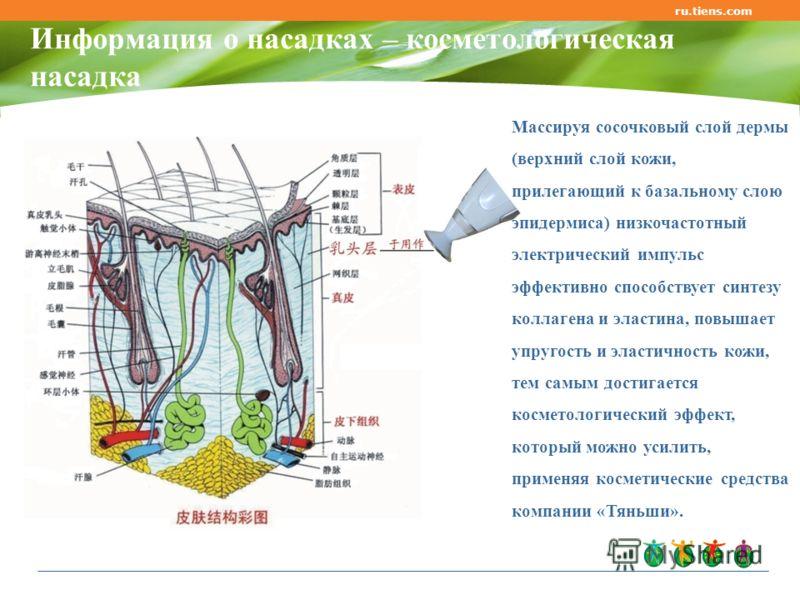 Информация о насадках – косметологическая насадка ru.tiens.com Массируя сосочковый слой дермы (верхний слой кожи, прилегающий к базальному слою эпидермиса) низкочастотный электрический импульс эффективно способствует синтезу коллагена и эластина, пов