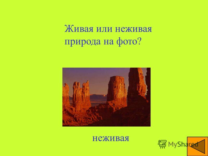 Живая или неживая природа на фото? Река, камни – неживая, растительность – живая природа