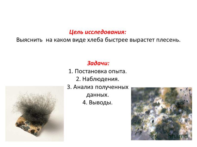 Цель исследования: Выяснить на каком виде хлеба быстрее вырастет плесень. Задачи: 1. Постановка опыта. 2. Наблюдения. 3. Анализ полученных данных. 4. Выводы.
