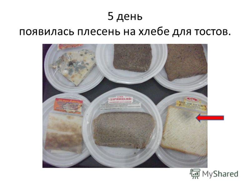 5 день появилась плесень на хлебе для тостов.