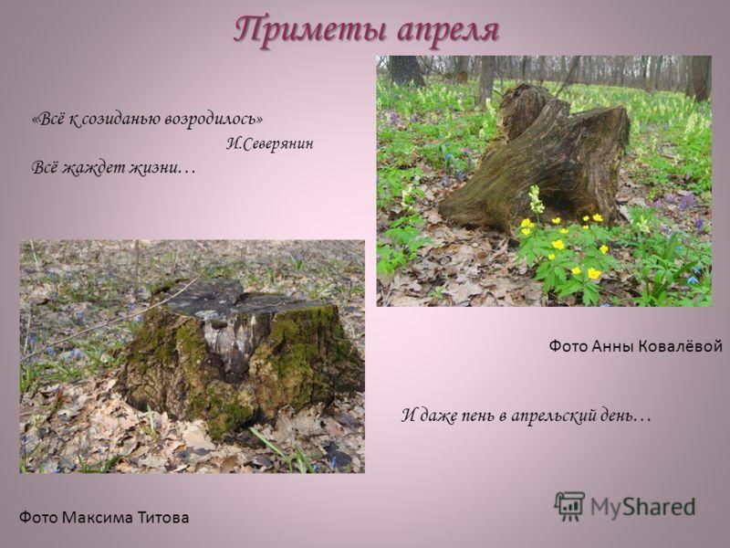 Приметы апреля Фото Анны Ковалёвой Фото Максима Титова «Всё к созиданью возродилось» И.Северянин Всё жаждет жизни… И даже пень в апрельский день…