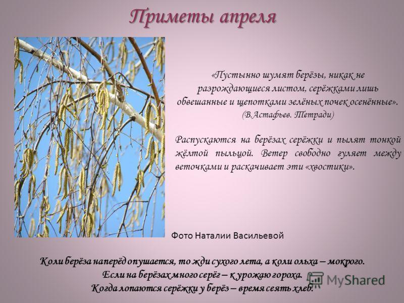 Приметы апреля «Пустынно шумят берёзы, никак не разрождающиеся листом, серёжками лишь обвешанные и щепотками зелёных почек осенённые». (В.Астафьев. Тетради) Распускаются на берёзах серёжки и пылят тонкой жёлтой пыльцой. Ветер свободно гуляет между ве