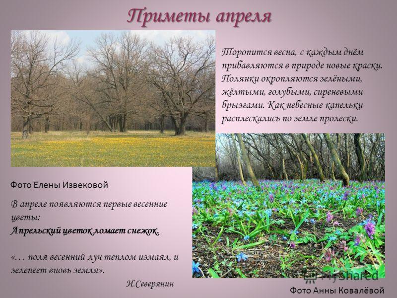Приметы апреля Фото Елены Извековой Фото Анны Ковалёвой Торопится весна, с каждым днём прибавляются в природе новые краски. Полянки окропляются зелёными, жёлтыми, голубыми, сиреневыми брызгами. Как небесные капельки расплескались по земле пролески. В