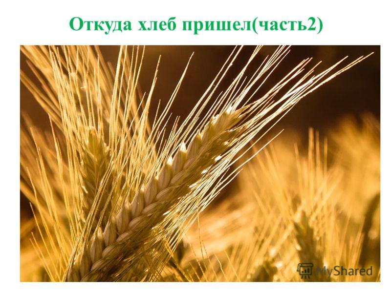 Откуда хлеб пришел(часть2)