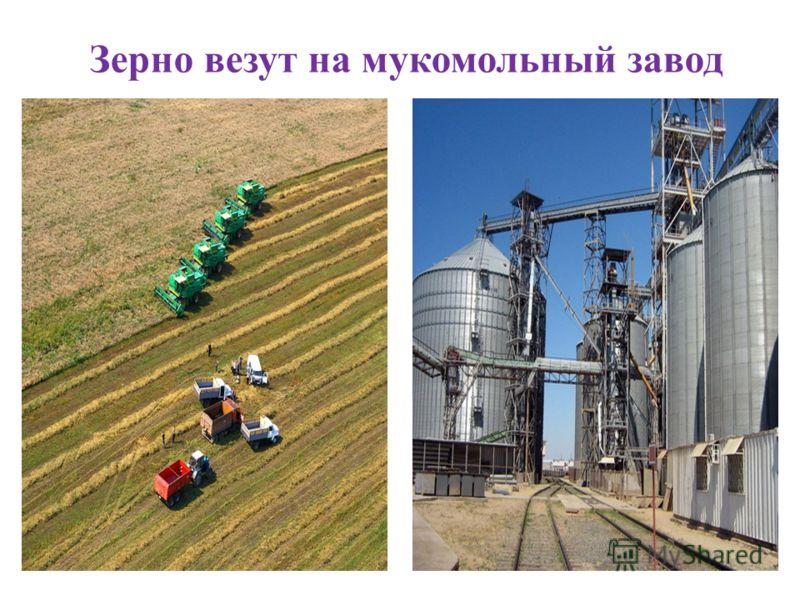 Зерно везут на мукомольный завод