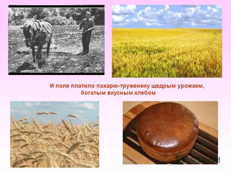 И поле платило пахарю-труженику щедрым урожаем, богатым вкусным хлебом