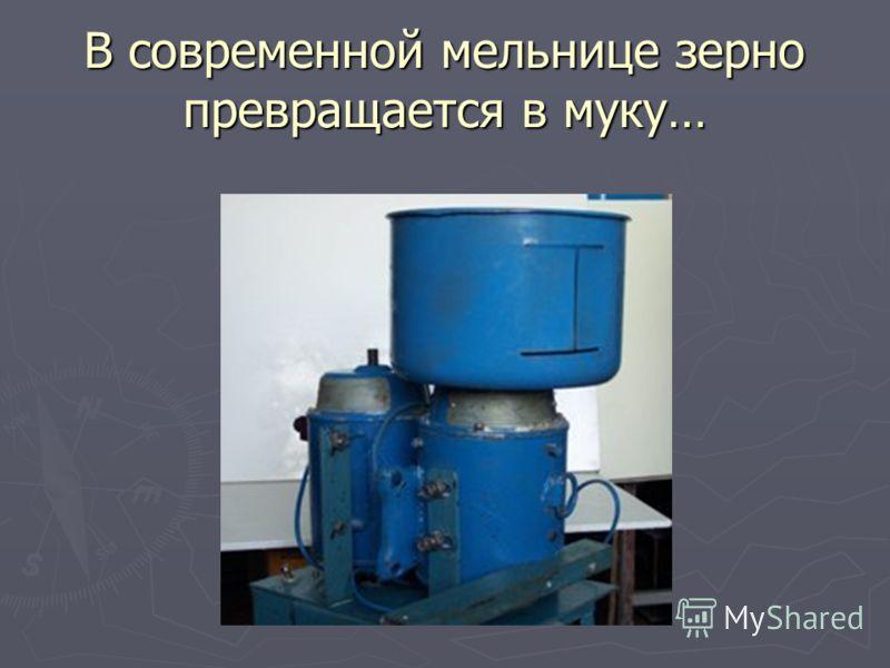 В современной мельнице зерно превращается в муку…