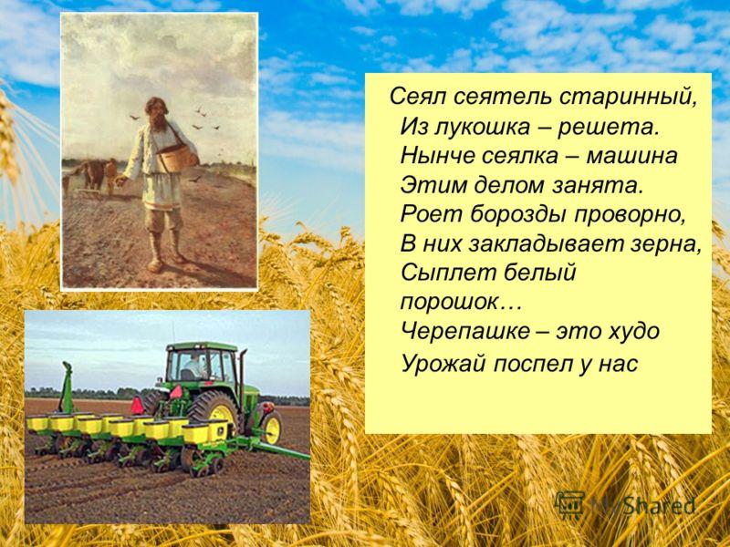 Сеял сеятель старинный, Из лукошка – решета. Нынче сеялка – машина Этим делом занята. Роет борозды проворно, В них закладывает зерна, Сыплет белый порошок… Черепашке – это худо Урожай поспел у нас