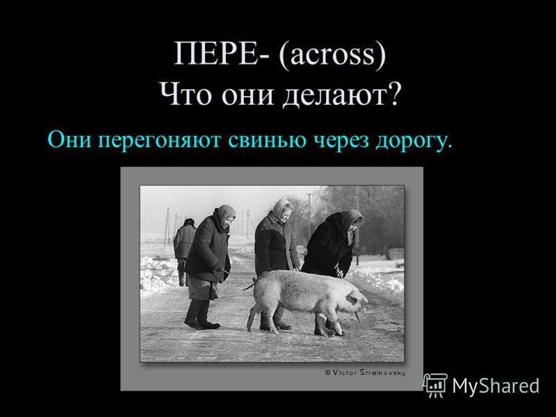 ПЕРЕ- (across) Что они делают? Они перегоняют свинью через дорогу.